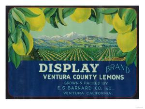 Display Lemon Label - Ventura, CA by Lantern Press