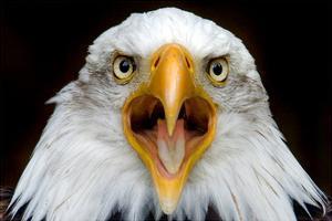 Eagle Face by Lantern Press