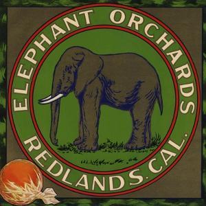 Elephant Orchards Brand - Redlands, California - Citrus Crate Label by Lantern Press