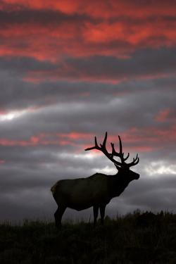 Elk and Sunset by Lantern Press