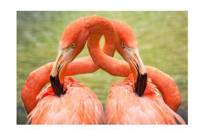 Flamingo Hug by Lantern Press