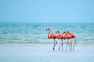 Flamingos and Ocean by Lantern Press