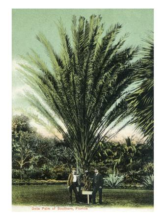 Florida - Men Standing by Huge Date Palm