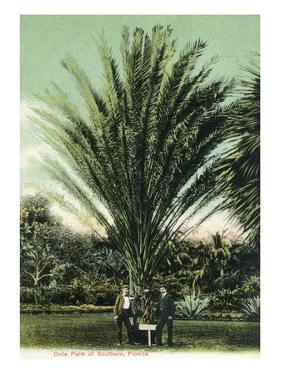 Florida - Men Standing by Huge Date Palm by Lantern Press
