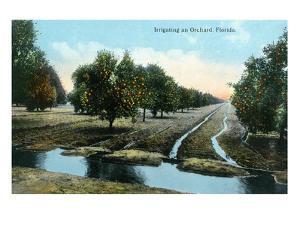 Florida - Orchard Irrigation Scene by Lantern Press