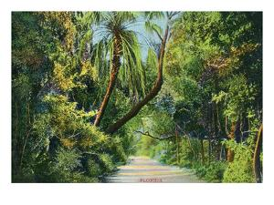 Florida - Overgrown Vegetation Scene by Lantern Press
