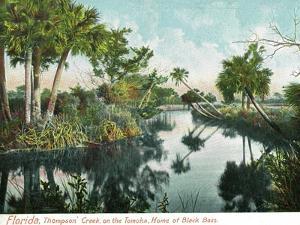 Florida - Thompson's Creek on Tomoka River by Lantern Press