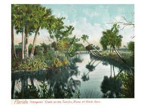 Florida - Thompson's Creek on Tomoka River by Lantern Press