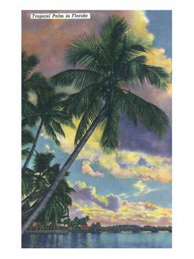 Florida - View of a Palm During Sunset by Lantern Press