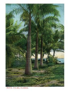 Florida - View of Royal Palms by Lantern Press