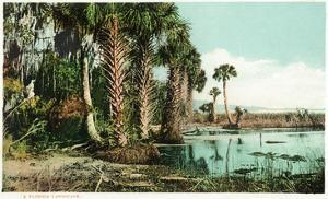 Florida - View of Swamps and Palms by Lantern Press