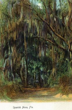 Florida - View of Trees with Spanish Moss by Lantern Press