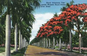 Fort Myers, Florida - First Street, Royal Poinciana Trees Flowering Amidst Royal Palms, c.1948 by Lantern Press
