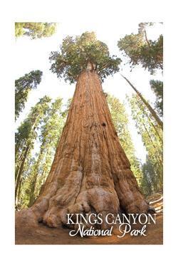 General Grant Tree - Kings Canyon National Park, California by Lantern Press