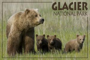 Glacier National Park - Grizzly Bear and Cubs by Lantern Press