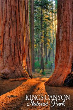 Grants Grove - Kings Canyon National Park, California by Lantern Press