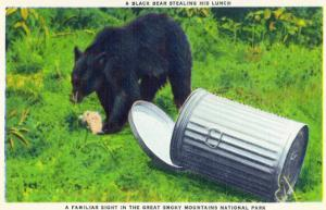 Great Smoky Mts Nat'l Park, TN - Black Bear Stealing Lunch from Trashcan by Lantern Press