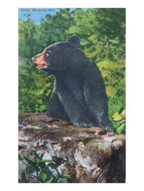 Great Smoky Mts. Nat'l Park, Tn - View of a Smoky Mountain Bear, c.1946 by Lantern Press