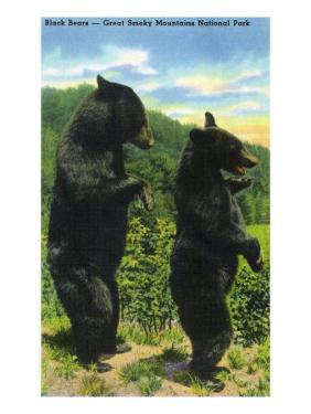 Great Smoky Mts. Nat'l Park, Tn - View of Two Black Bear Standing, c.1938 by Lantern Press