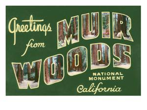 Greetings from Muir Woods National Monument, California by Lantern Press