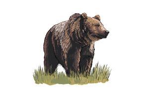 Grizzly Bear - Icon by Lantern Press