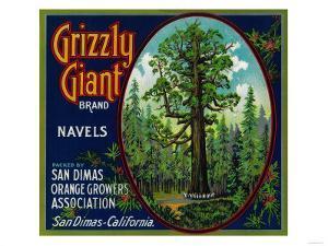 Grizzly Giant Orange Label - San Dimas, CA by Lantern Press