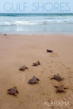Gulf Shores, Alabama - Sea Turtles Hatching by Lantern Press