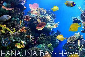 Hanauma Bay, Hawai'i - Fish and Coral 1 by Lantern Press