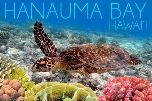 Hanauma Bay, Hawai'i - Sea Turtle and Coral by Lantern Press
