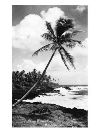 Hawaii - Palms along the Beach by Lantern Press