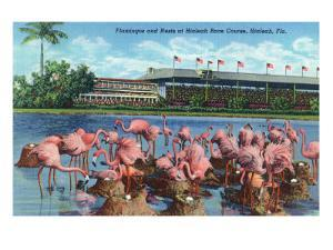 Hialeah, Florida - View of Flamingos outside the Hialeah Race Course by Lantern Press