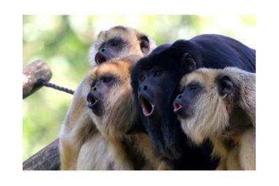 Howler Monkey Group by Lantern Press
