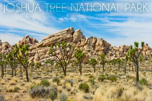Joshua Tree National Park, California - Blue Sky and Rocks by Lantern Press