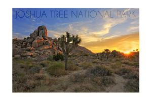 Joshua Tree National Park, California - Sunrise by Lantern Press