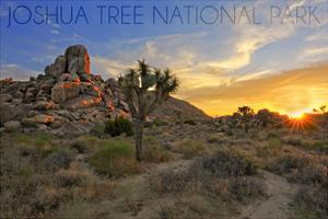 Joshua Tree National Park, California - Sunrise by Lantern Press