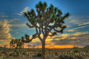 Joshua Tree National Park, California - Tree in Center by Lantern Press