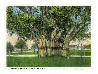 Key West, Florida - Barracks Banyan Tree Scene