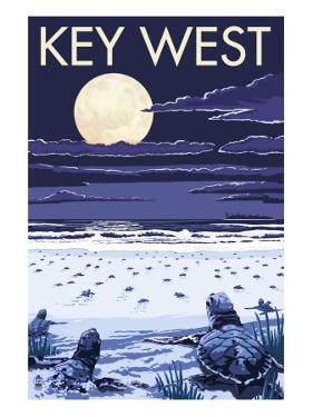 Key West, Florida - Sea Turtles Hatching by Lantern Press