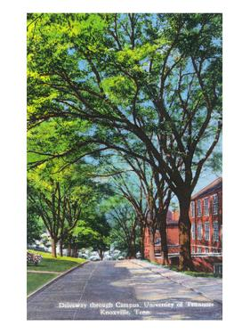 Knoxville, Tennessee - University of Tennessee - Scenic Driveway View on the Campus by Lantern Press