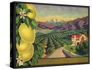 Lemons and Orchard - Citrus Crate Label by Lantern Press