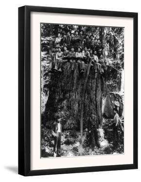 Lumberjacks prepairing Fir Tree for St. Louis World's Fair Photograph - Washington State by Lantern Press