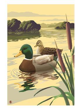 Mallard Ducks by Lantern Press
