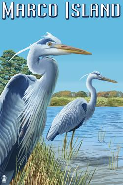 Marco Island - Blue Herons by Lantern Press