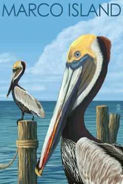 Marco Island - Pelicans by Lantern Press