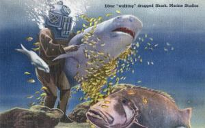 Marineland, Florida - Diver Moving Drugged Shark at Marine Studios by Lantern Press