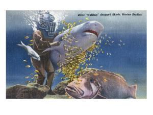 Marineland, Florida - Diver Moving Drugged Shark at Marine Studios by Lantern Press
