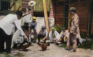 Mexico - A Cock Fight Scene by Lantern Press