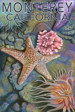 Monterey, California - Tidepool by Lantern Press