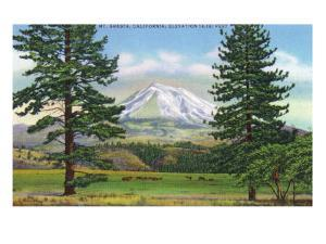 Mount Shasta, California - View of the Mountain from a Meadow, c.1940 by Lantern Press