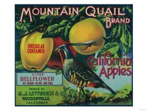 Mountain Quail Apple Crate Label - Watsonville, CA by Lantern Press